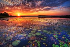 Impressive looks of Nature Water Lily Sunset Nature always wears the colors of the spirit. Amazing Sunsets, Beautiful Sunset, Beautiful World, Simply Beautiful, Beautiful Scenery, Natural Scenery, Absolutely Stunning, Beautiful Beaches, Beautiful Images